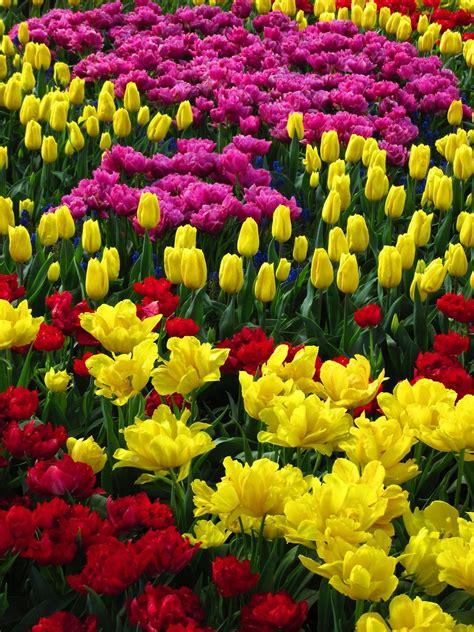 Justemoinue2 Arrayed Jardines Flores Bonitas Lirios ...