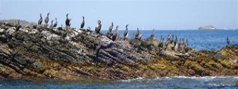 Justo Antonio Sánchez Ramírez: El 66% de aves marinas del ...