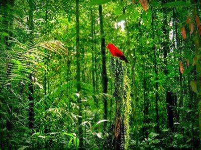 Juventud frente a los problemas ambientales: Problemática ...