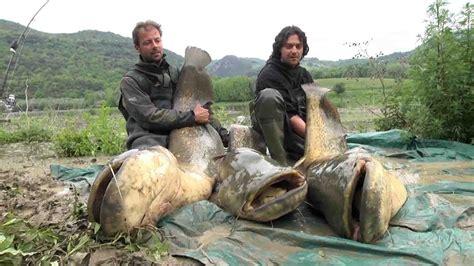 K Karp Web TV   Tecniche di pesca   Siluri nel Tevere ...