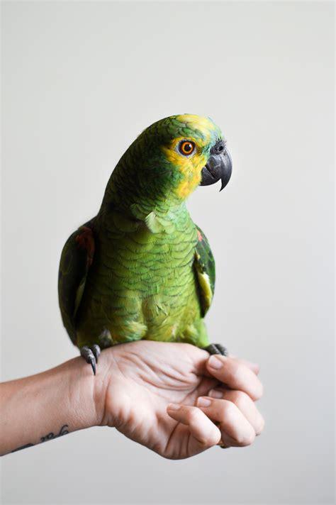 Keeping Pet Birds | The Pet Show with Warren Eckstein