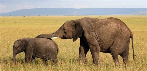 Kenia turismo   guía de viaje y mapa turístico de Kenia