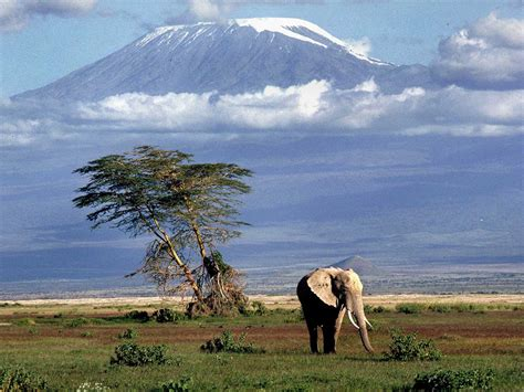 Kenya: Africa's Tourist Heartbeat • Connect Nigeria