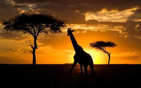 Kenya Independence Day: 23 reasons to visit now   Telegraph