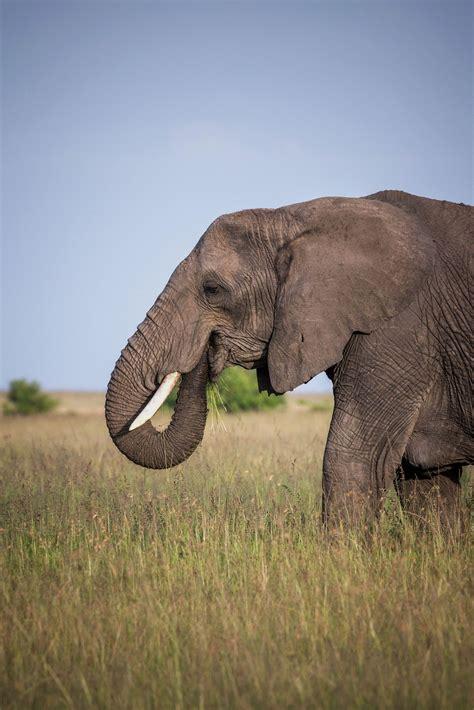 Kenya Safari For Information Access our Site https ...
