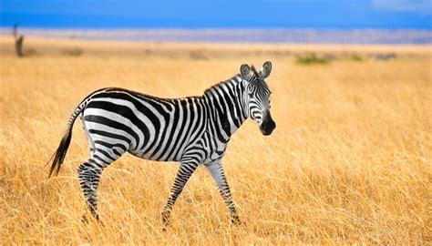 Kenya Travel Guide and Travel Information