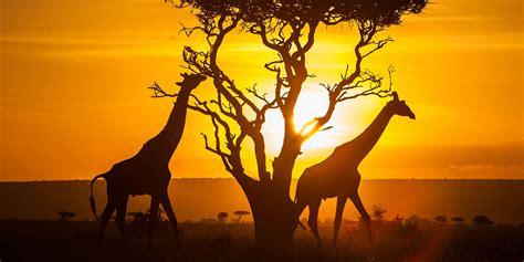 Kenya : une destination qui tient ses promesses   Arts et ...