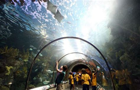 Kid friendly New Orleans and children s attractions ...