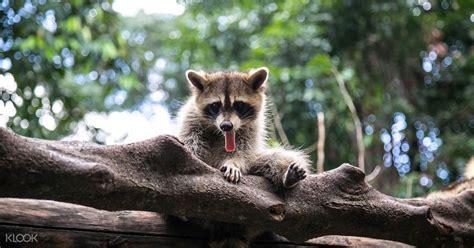 KL Tower Mini Zoo Discount Ticket in Kuala Lumpur, Malaysia