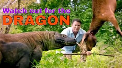 Komodo Dragon Crocodile Hunter
