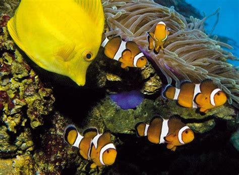 L Aquarium Barcelona | Horarios y Tarifas | Tipos de ...