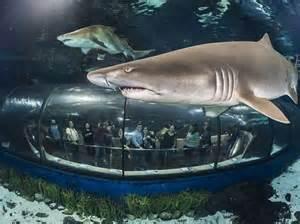 L Aquarium de Barcelona fa 25 anys   La Torre de Barcelona