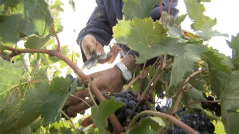 La agricultura de Castilla La Mancha, fuerte en el ...