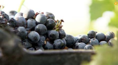 La agricultura de Castilla La Mancha se hace fuerte en el ...