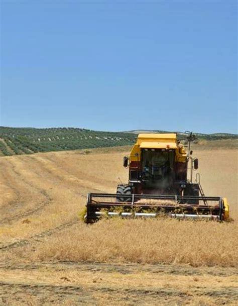 La agricultura de secano consigue mejores resultados si se ...