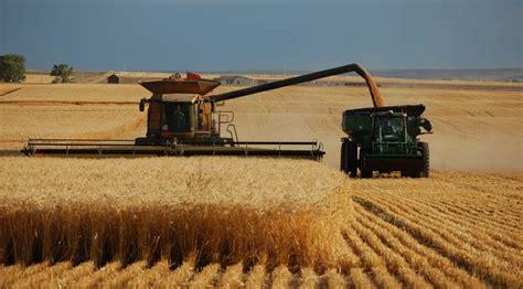 La agricultura intensiva es tan sostenible como la ...