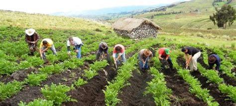 La agricultura juega un papel fundamental en la reducción ...