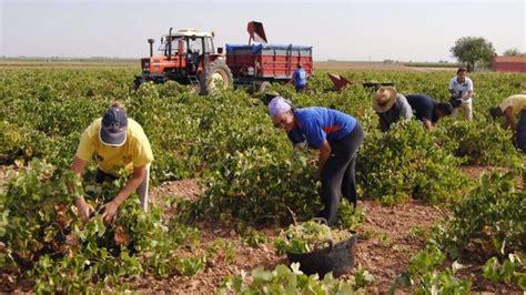 La agricultura salva a Castilla La Mancha de una nueva ...