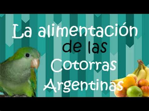 La alimentación de las Cotorras Argentinas   Aves   Amor ...