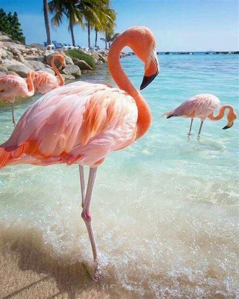 La belleza y encanto del flamenco   Flamingos, Paisaje ...