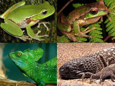 la biologia: Herpetología