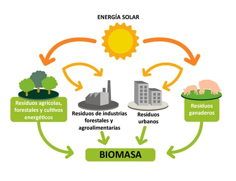 La biomasa: producir energía con un sistema ecológico