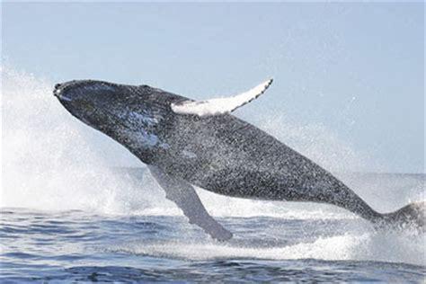 La Chachipedia: Las Ballenas y las orcas