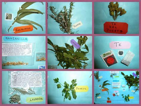 La Clase de Chucu y de Lila   Selaya : Plantas Aromáticas ...