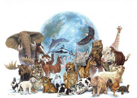 La clasificación de los animales   Diario Animales