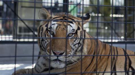 La Comunidad Valenciana prohíbe los circos con animales