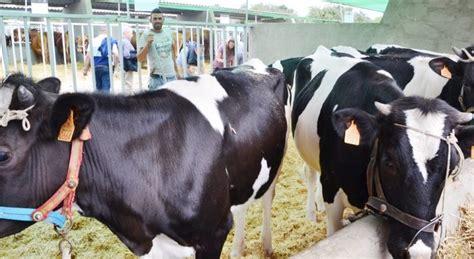 La Consejería de Agricultura activa un plan especial para ...
