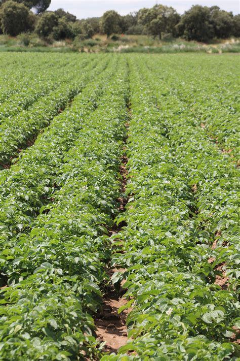 La Consejería de Agricultura publica el séptimo número de ...