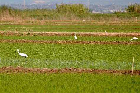 La Conselleria de Agricultura valenciana ayuda a los ...