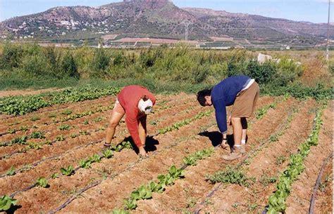 La conselleria valenciana de Agricultura deja fuera de las ...