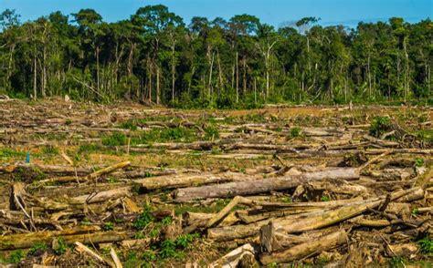 La deforestación ....500 especies en peligro!!!!   Faddi ...
