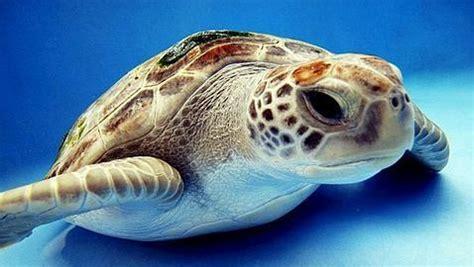 La desprotección de las especies marinas en España   ABC.es