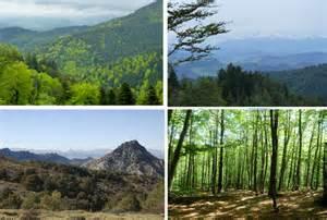 La diversidad de los bosques mediterráneos mejora su ...