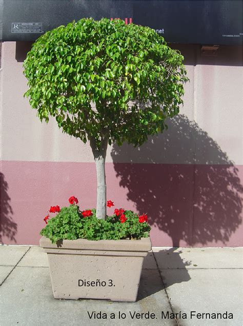 La Doctora De Las Plantas: Escoge las plantas apropiadas ...