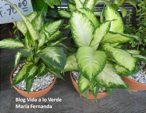 La Doctora De Las Plantas: Qué plantas usar para arreglos ...