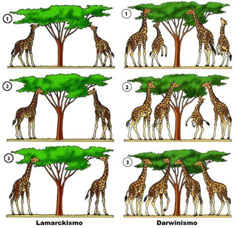La evolución de las especies: La teoría evolucionista de ...