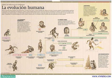 La evolución humana  con imágenes  | Evolución humana ...