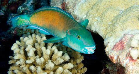 La extraña vida sexual de los animales marinos   National ...