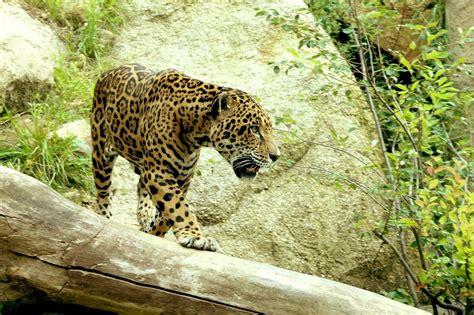 La fauna de la selva peruana