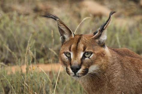 La fauna del bosque mediterráneo