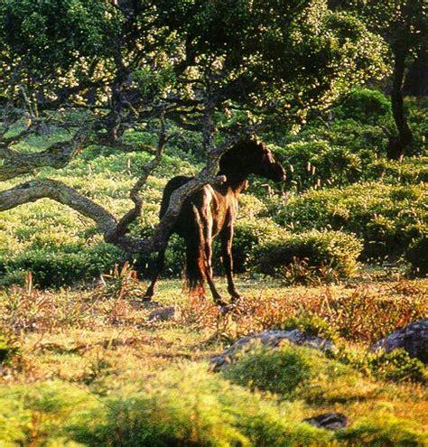 La Fauna della Sardegna di WEBINSARDINIA, un oasi nel ...