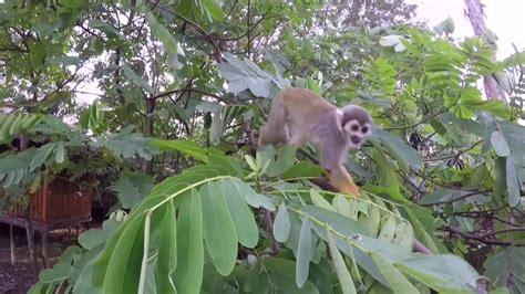 La fauna y flora del amazonas, única en belleza a nivel ...
