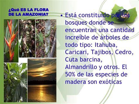 La flora y fauna de la amazonia 3
