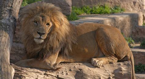 La Fundación Barcelona Zoo abre la convocatoria de becas ...