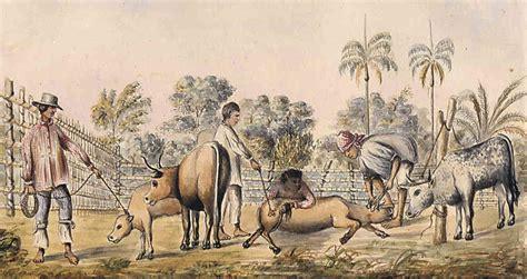 La ganadería: su aporte al proceso de independencia y ...