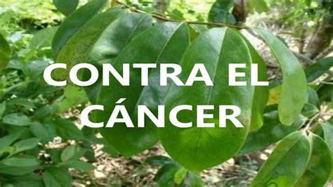LA GUANÁBANA CURA 12 TIPOS DE CÁNCER, CÓMO CURAR EL CÁNCER ...